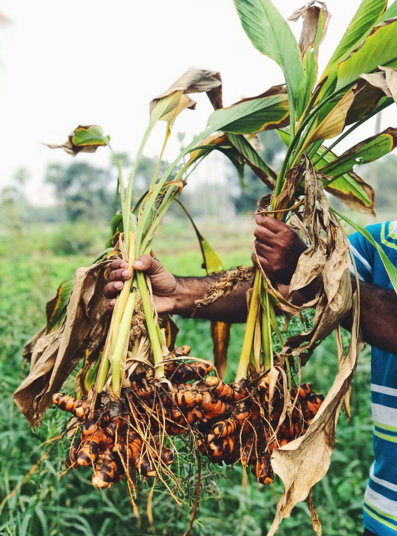 Man Holding Turmeric Roots Sanna Conscious Concept