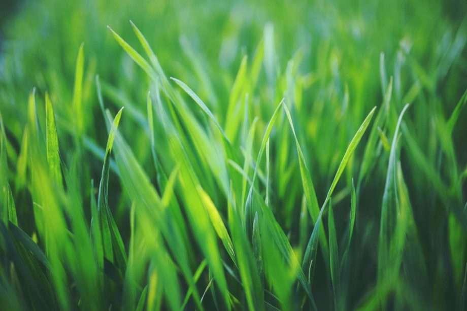 grass sanna conscious concept