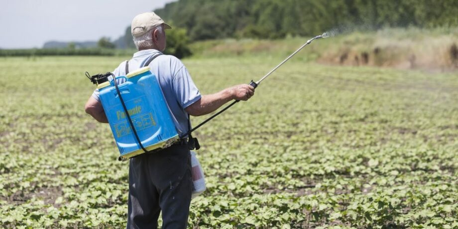 man dumping pesticides on his cotton field sanna conscious concept