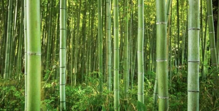 bamboo tiges archive 8 biodegradables fabrics sanna conscious concept