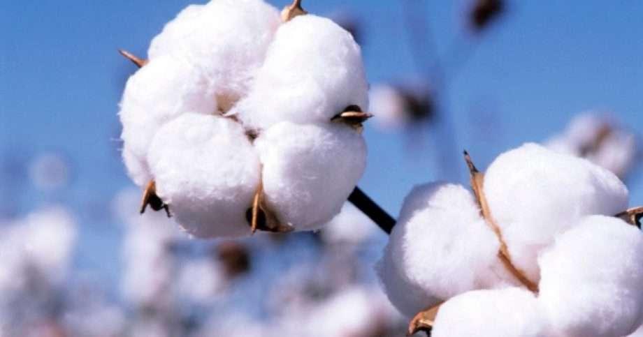 cotton sanna conscious concept