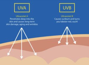 uva uvb explanation sanna conscious concept