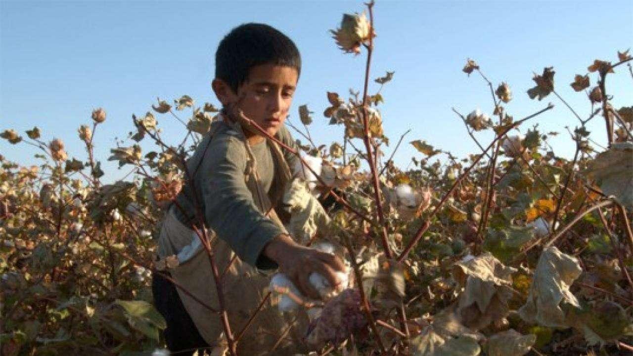 uzbekistan child labor cotton sanna conscious concept